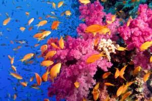 Diving Koh Chang