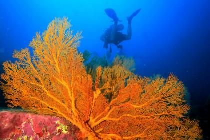 Scuba Dive Thailand