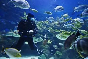 Sea-sun-divers