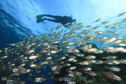 Scuba Zone Dive Centre
